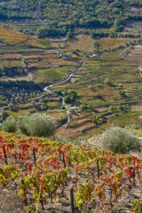 vineyards, Douro Valley, Portugal