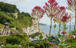 flowers, close-up, cliffs, Beer, Devon, UK, fishing village