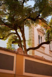 evening light strokes tree in mansion garden, Coimbra, Portugal