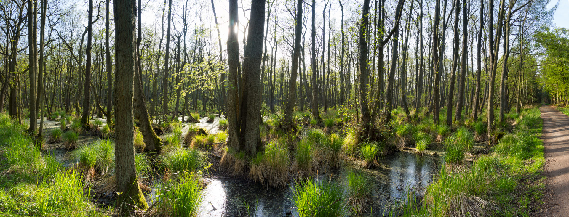 Panorama, Baltic Sea, Western Pomerania Lagoon Area National Park, Darss forest, swamp forest