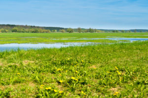 Brandenburg, Oder, landscape, meadow