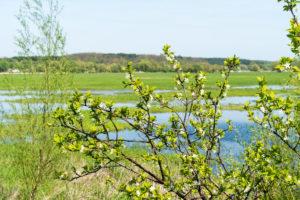 Brandenburg, Oder, landscape, blossom branches