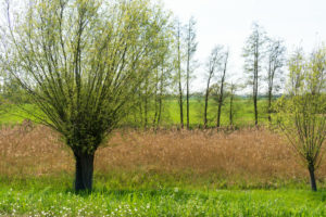 Oderbruch, Bruchlandschaft hinter dem Deich, Weide