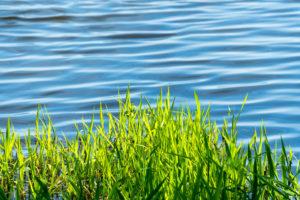 Oderbruch, Wasser, Gras