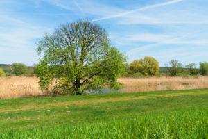 Brandenburg, Oderbruch, Fluss Oder, Naturschutzgebiet