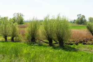 Oderbruch, Bruchlandschaft hinter dem Deich, Weiden