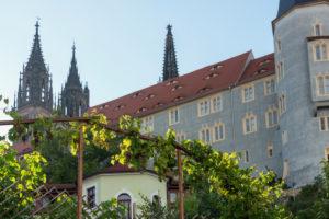 Sachsen, Meißen, Altstadt, Meißner Dom, Albrechtsburg, Weinanbau