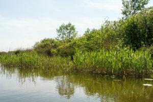 Biosphere reserve Schorfheide-Chorin, Oberucker lake, Ucker canal, shore