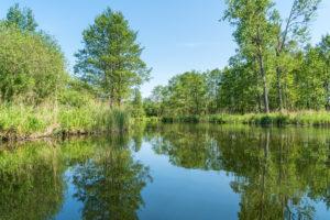 Biosphärenreservat Schorfheide-Chorin, Oberuckersee, Uckerkanal, Paddeltour, Spiegelung