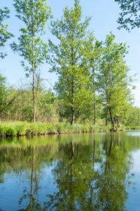 Biosphere Reserve Schorfheide-Chorin, Oberucker lake, Ucker Canal, Birches