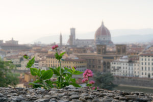 Florence, view to the cathedral, wall with blossom