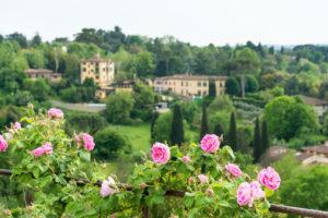 Florence, Giardino di Boboli, Roses