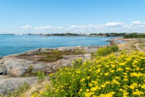 Helsinki, Insel Suomenlinna, Schärenlandschaft, Rainfarn, Tanacetum vulgare, Chrysanthemum vulgare