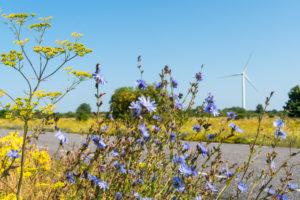 Estonia, Baltic Sea coast, Pakri-Pank, highway, windmill, cornflowers