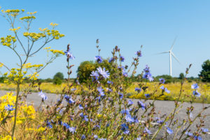 Estonia, Baltic Sea coast, Pakri-Pank, highway, windmill, cornflowers