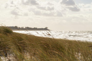 Baltic Sea, Fischland, Darß, coast at storm, view to windswept tree