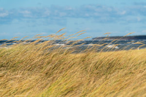 Baltic Sea, Fischland, Darß, west beach, coast in storm, dune grass in the wind