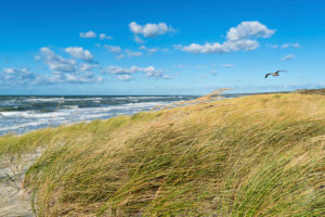 Baltic Sea, Fischland, Darß, Weststrand, coast at storm surge, seagull