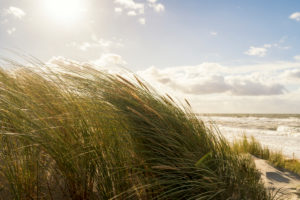 Baltic Sea, Fischland, Darß, Weststrand, coast in storm, dune grass in the wind, back light