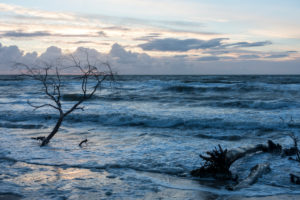 Fischland, Darß, west beach in the evening light, storm, flotsam