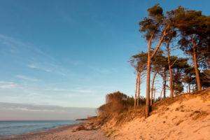 Fischland, Darß, Western Pomerania Lagoon Area National Park, Weststrand, windswept tree