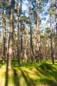 Baltic Sea, Western Pomerania Lagoon Area National Park, Darss forest, fen wood