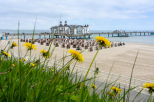island of Rügen, baltic resort Sellin, pier and beach chairs behind flowering dandelions