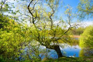 Ostseebad Prerow, Prerower Strom, Frühling, Schwan und Ente