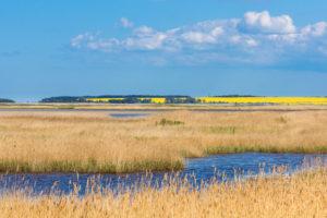 Baltic Sea, Zingst, Western Pomerania lagoon area