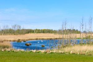Baltic Sea, Zingst, Western Pomerania lagoon area at Pramort