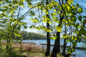 Berlin, Wannsee, riverside path, bank protection zone, reeds and chestnut trees