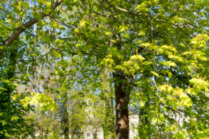 Berlin, Wannsee, chestnut trees in front of Glienicke Palace