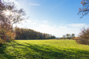 Berlin, Wannsee, Pfaueninsel, meadow in autumn light