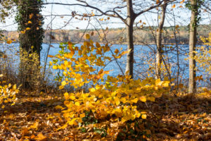Berlin, Wannsee, Pfaueninsel in autumn, colorful beech leaves