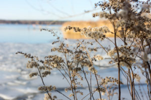 Berlin, Wannsee, winter, shrub