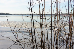 Berlin, Wannsee, Winter, Strauch
