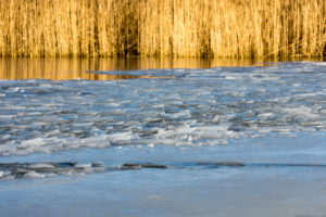 Berlin, Wannsee, reed banks, ice