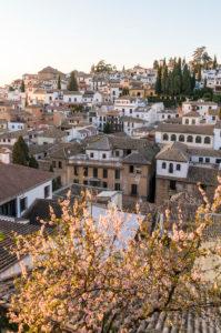 Spanien, Granada, Mirador de la Churra, Blick zum Stadtviertel Albaicin, Baumblüte