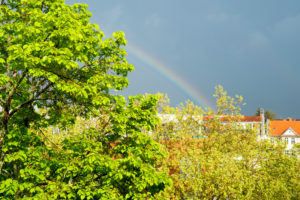 Berlin, street, top floor, linden tree, plane tree, rainbow