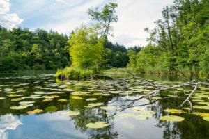 Mecklenburger Seenplatte, Drosedower Bek, Erlenbruch, Sumpfgebiet