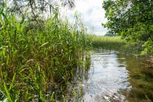 Mecklenburg, Labussee, im Schilf versteckte Badebucht