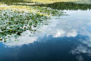 Mecklenburger Seenplatte, Kagarsee, Seerosen, Wolkenspiegelung