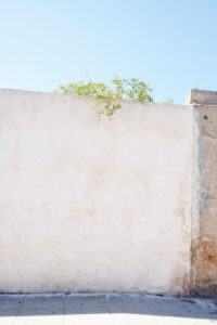 Wall, green, plant, blue sky