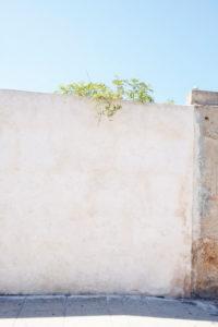 Wand, Mauer, grün, Pflanze, blauer Himmel
