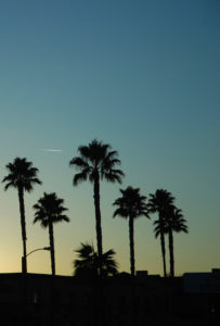 Palms, silhouette, nature, scenery, heaven, sundown