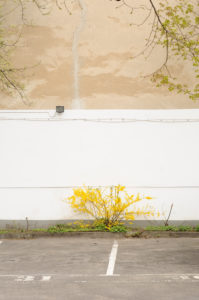 Court, parking lot, wall, places, forsythias