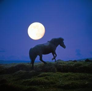 Horse, paddock, full moon,
