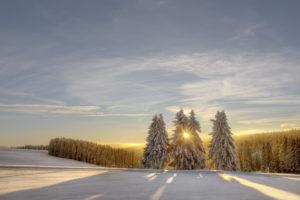 Germany, Thuringia, Neustadt/Rennsteig, trees, sun, snow,