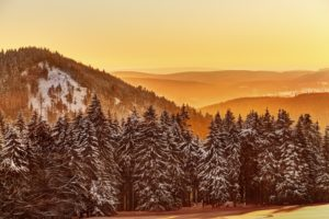 Germany, Thuringia, Gehlberg, Schmücke, mountain silhouettes, spruces, snow, back light,