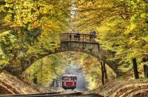 Train passes through a forest, bridge, people, fall, back light, Kalenborn, Rhineland-Palatinate, Germany,